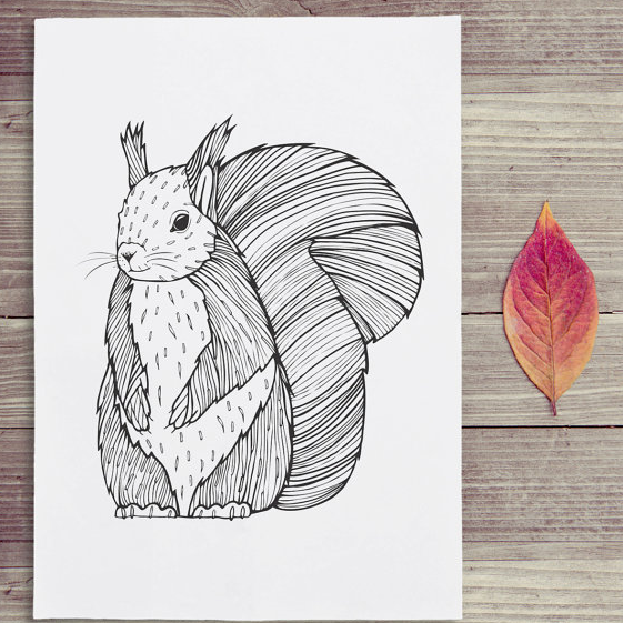 clare corfield carr squirrel drawing art illustration draw art design